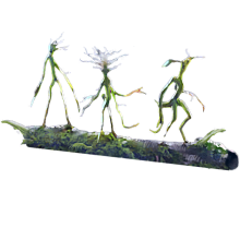 Branch of Bowtruckles